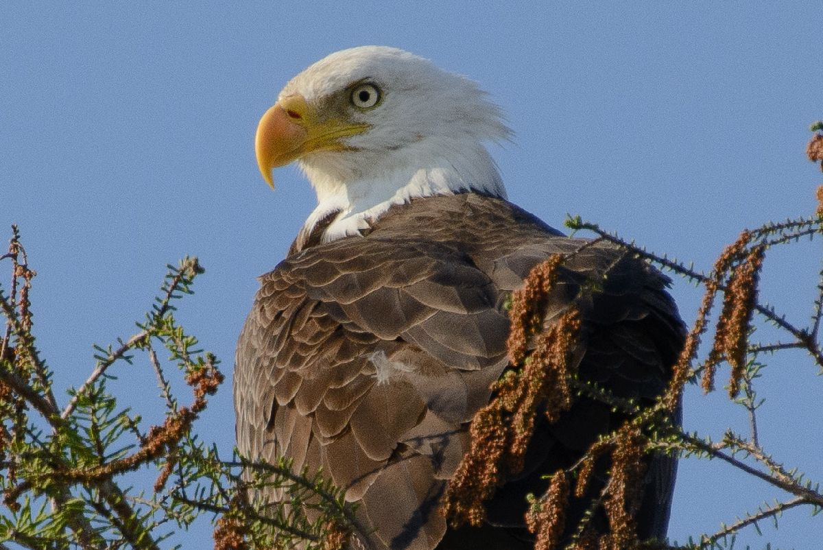 Alligators And Bears And Eagles Oh My Louisiana Travel