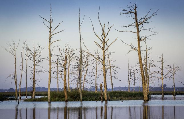 Outdoors views at Poverty Point Reservoir State Park in Delhi, Louisiana