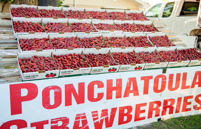 Taste the Ponchatoula strawberries in early spring at the Strawberry Festival