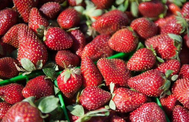 Ponchatula, Louisiana Strawberries