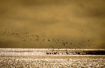 Birds fly over the water at Grand Isle