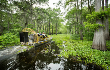 McGees Swamp Tour - Airboat through the swamp