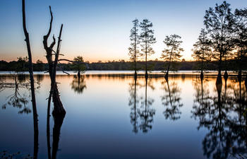 Toledo-bend-Forest-Scenic-Byway_web.jpg