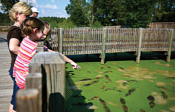 Top Things to Do with Kids in Northern Louisiana