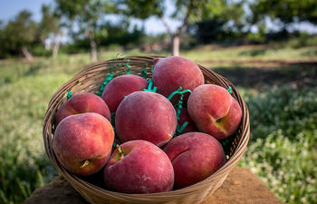 ruston_peaches_orchard_web.jpg