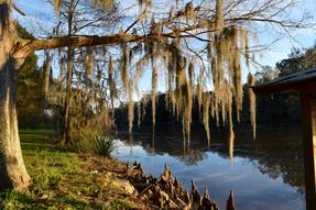 Bayou Teche Scenic Byway Photo