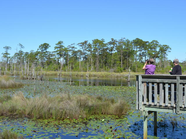 Big Branch Marsh National Wildlife Refuge has boardwalks through the swamp. Red cockaded woodpeckers can be found there.