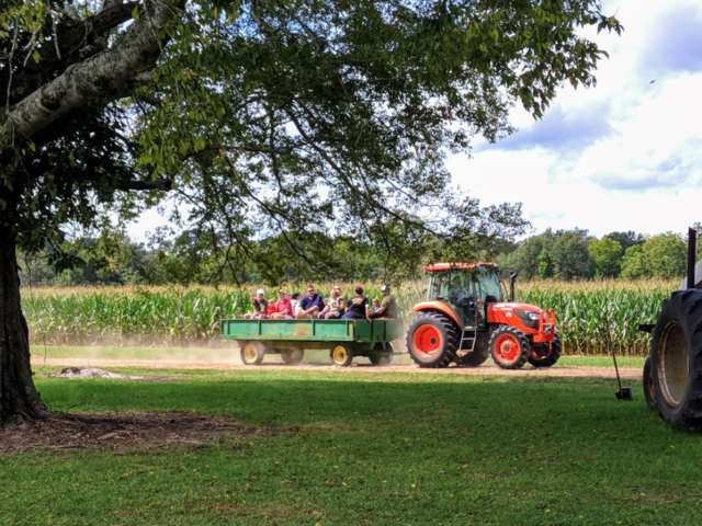 Enjoy a wide array of activities at Luckett Farms Photo