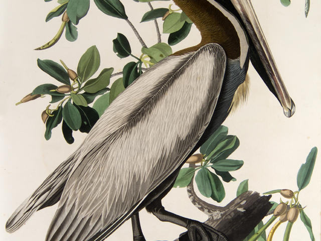 """The Birds of America"" (double elephant folio edition) by John James Audubon"