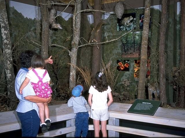 Tickfaw State Park's nature center offers a variety of fun and educational activities. Photo