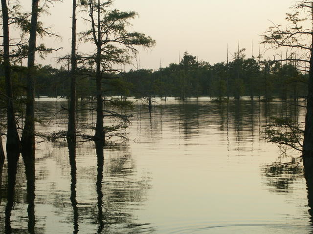 Black Bayou Lake at sunset Photo 2