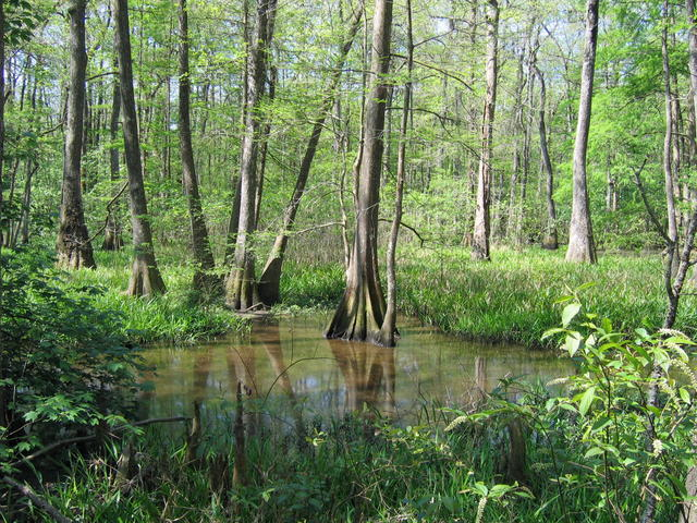 BREC's Bluebonnet Swamp Nature Center Photo 2