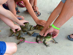 Frog Jump Contest at Rayne Frogfest