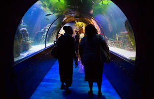 Shreveport-Aquarium_web.jpg